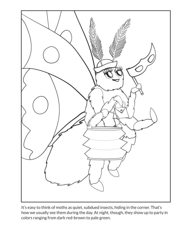 bug-coloring-book-moth