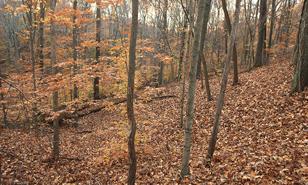 best hiking trails in illinois